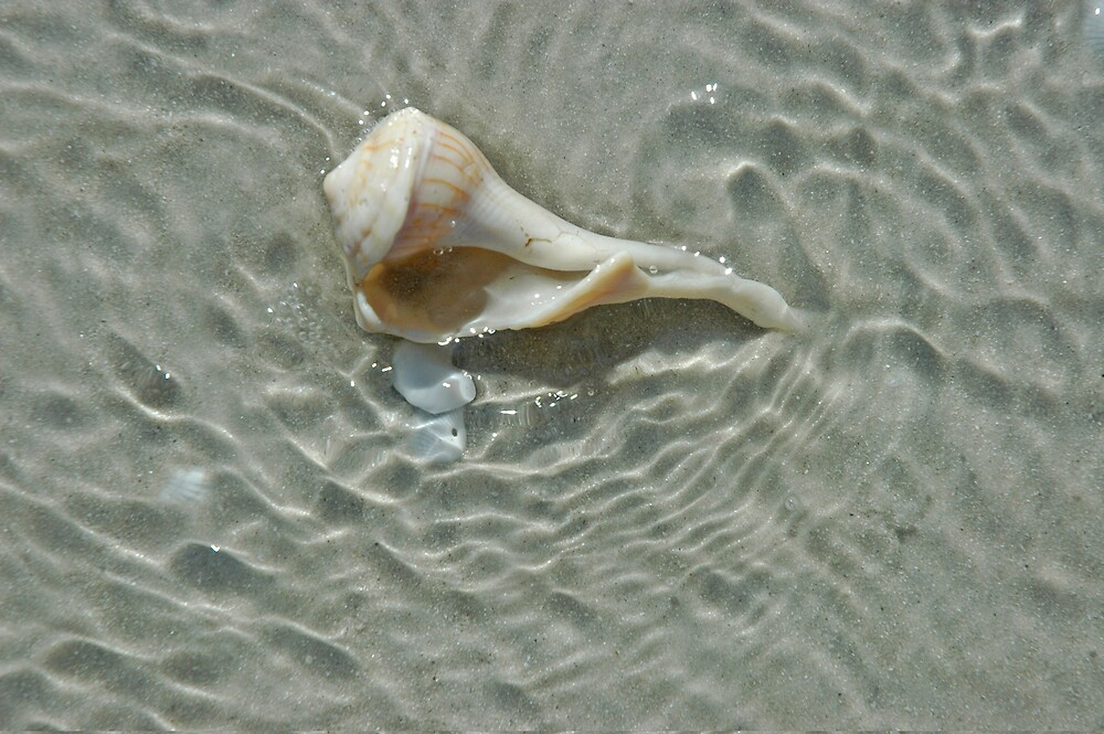 Sea Shell in Moving Tidal Waters by pjwuebker