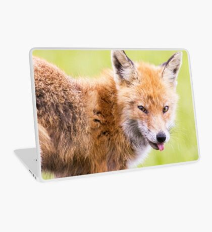 Red Fox Laptop Skin