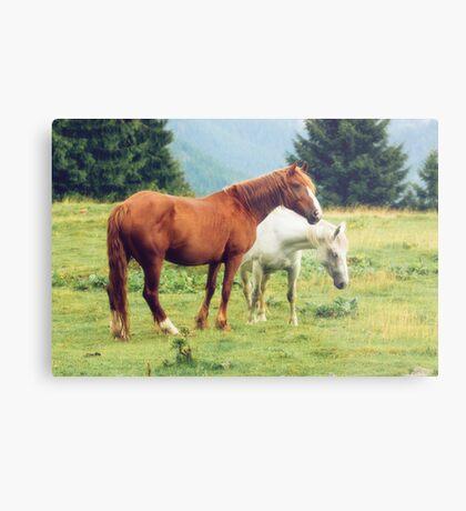Romanian horses Metal Print
