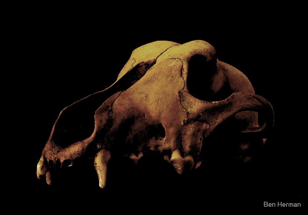 Skull 3 by Ben Herman