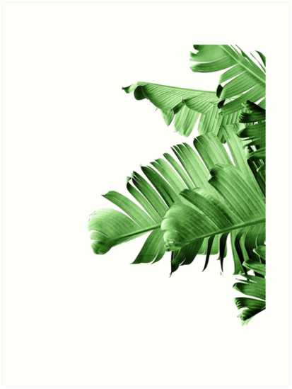 banana palm leaf art prints by thegypseatribe redbubble