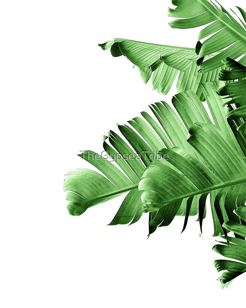 BANANA PALM LEAF by TheGypseaTribe