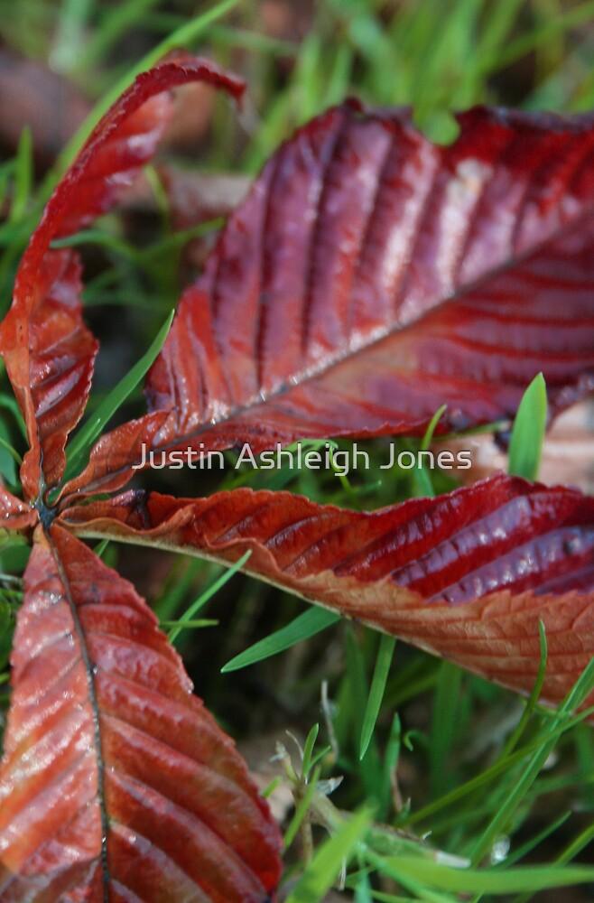 Autumn Colours by Justin Ashleigh Jones