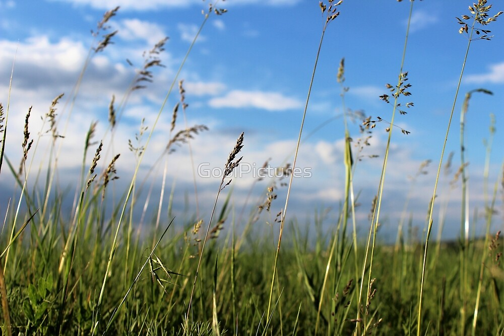 Field by GoolPictures