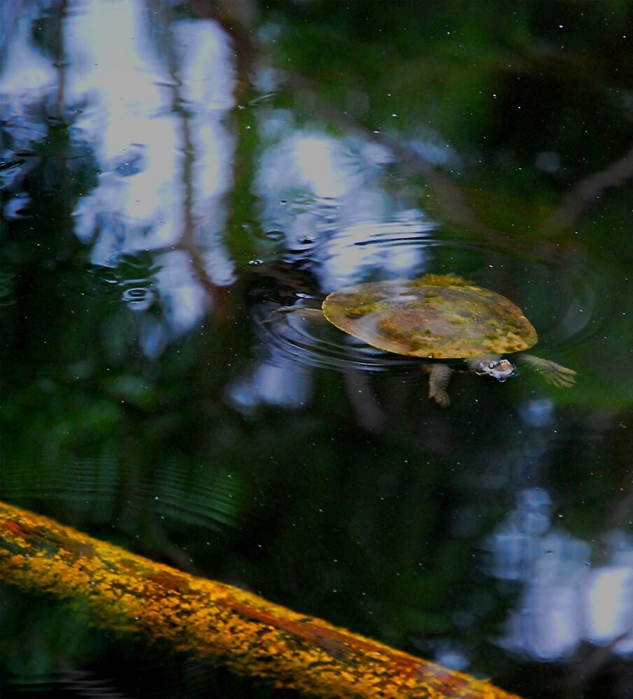 Turtle by Princessbren2006
