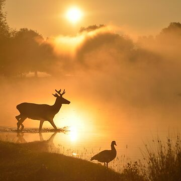 Misty Sunrise, Bushy Park, London by kasianowak