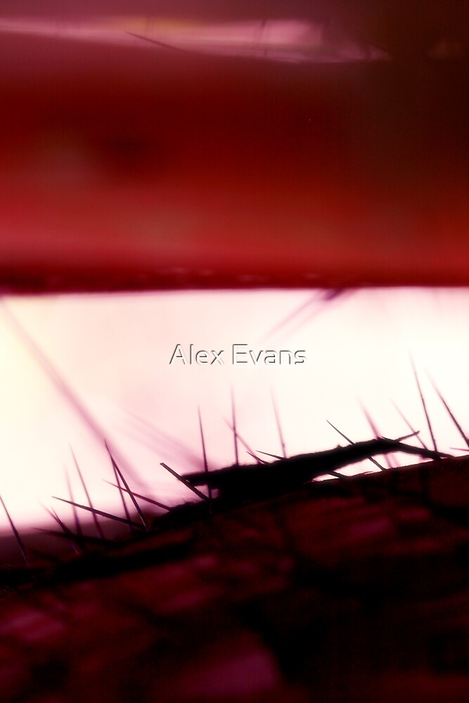 Amazon Abstract by Alex Evans