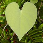 Heart Leaf (untouched  by Rubyblossom