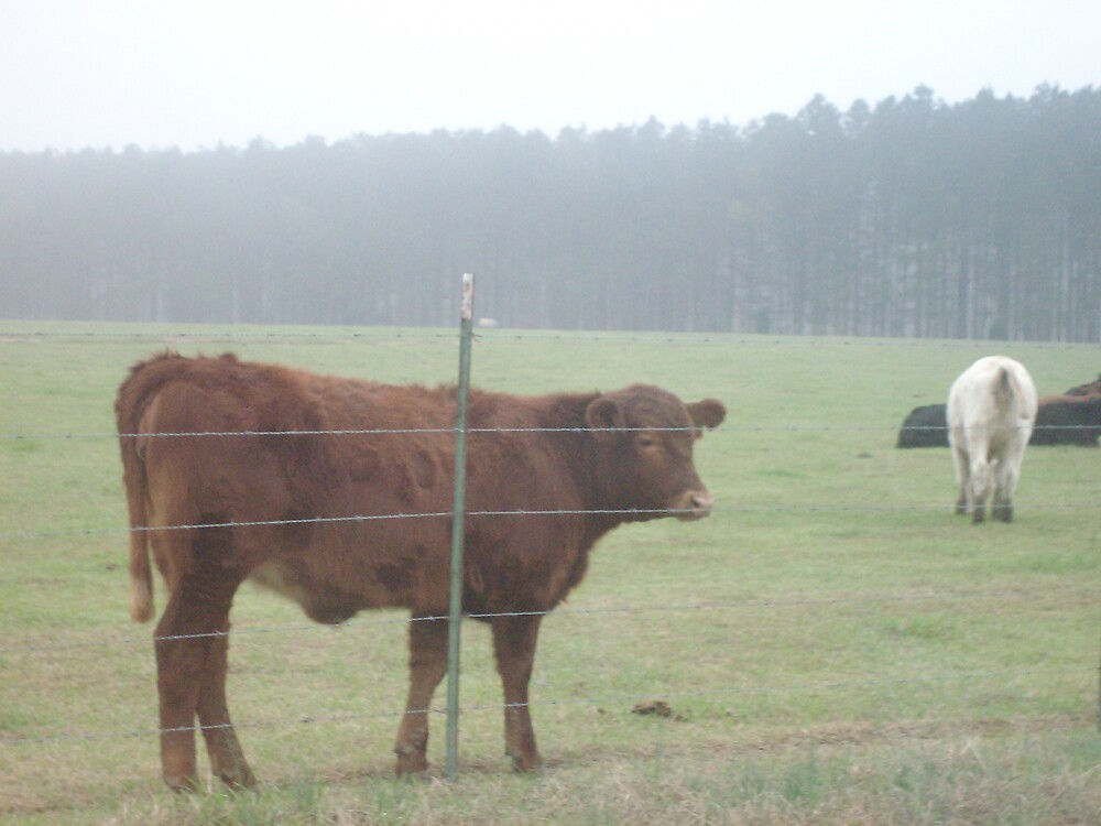 Cows by animallover7249