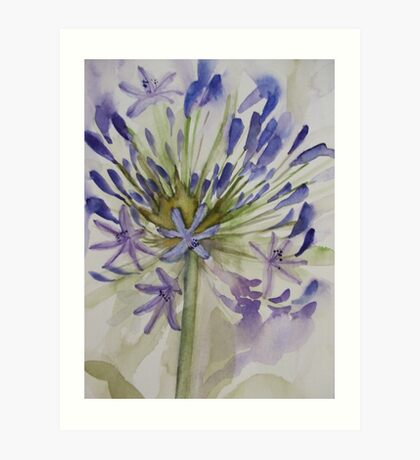 agapanthus bloom 'for the love of flowers' © 2007 patricia vannucci  Art Print