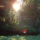 morning sun through the trees by photolvr761