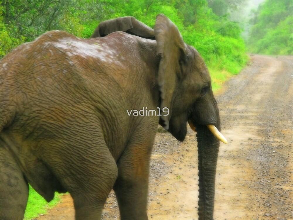 Elephant. Hluhluwe Umfolozi Game Reserve, South Africa. by vadim19