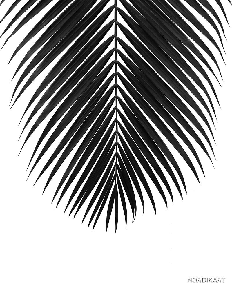 PALM LEAF Black & White II by NORDIKART