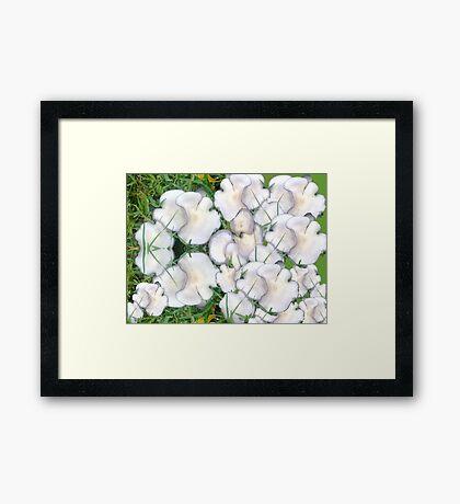 Mushroom Maddness Framed Print