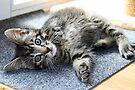 Charlie Tahiti Kitten by Jo Nijenhuis