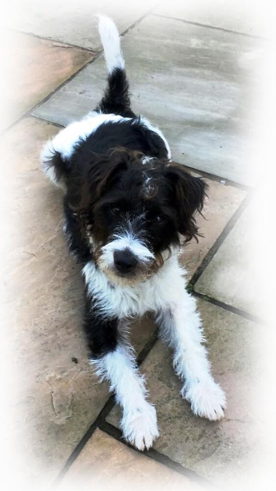 Parsons Terrier 'Terry' by xxBigAlxx