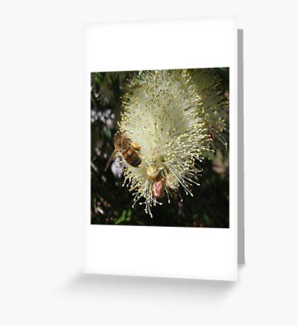 Bee on Beautiful Bottlebrush Greeting Card