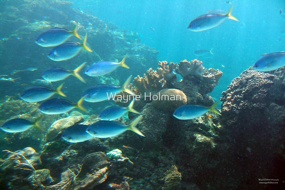 Reef Life by Wayne Holman