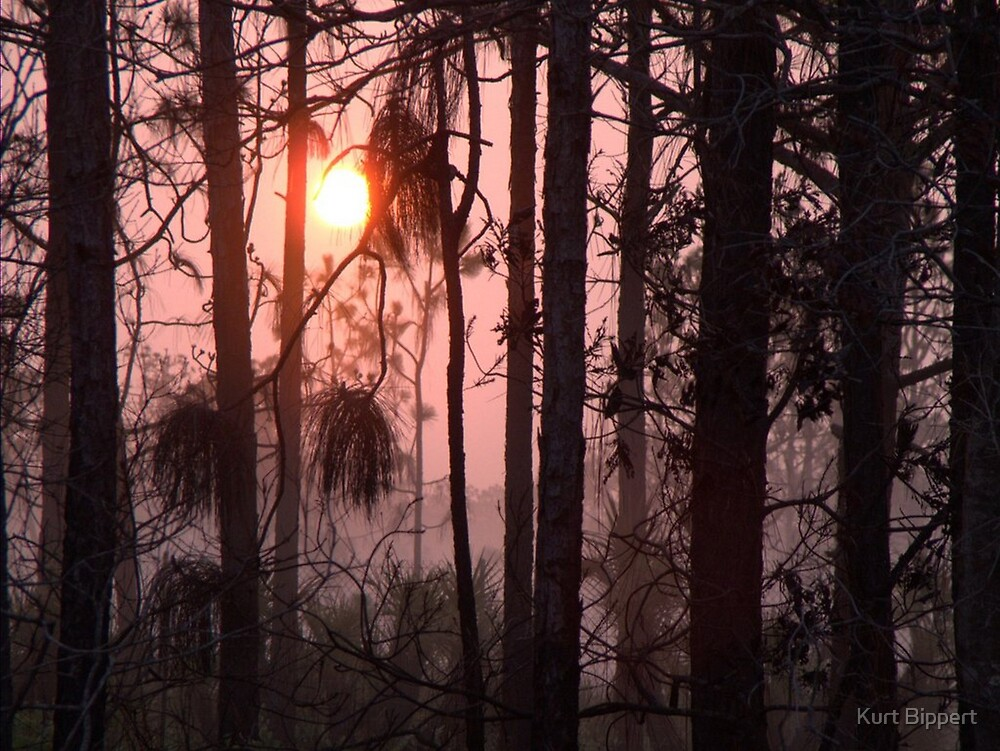 Brush fire morning by Kurt Bippert