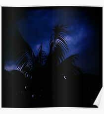 Holga madness......little palm and stormy sky Poster