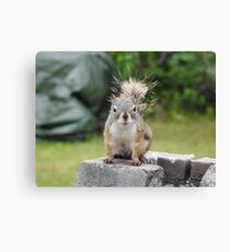 Wet Squirrel Canvas Print