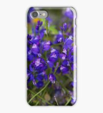 Flowers of the Milkwort Polygala major iPhone Case/Skin