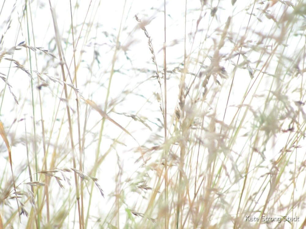 Fine grasses by katestrong