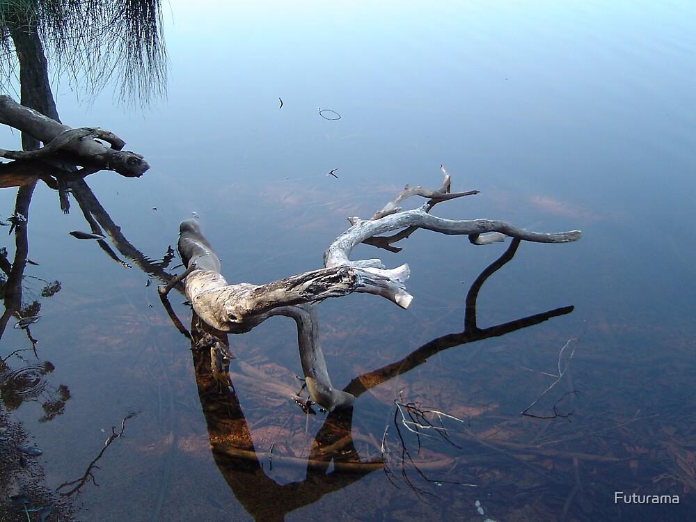 Fallen Branch by Futurama