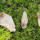 «Las hojas del trébol y el sueño» de lucielitchi