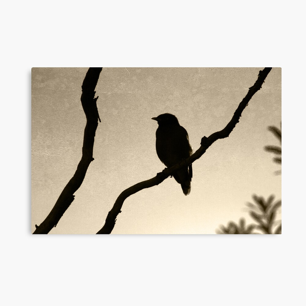 Morning Silhouette Canvas Print