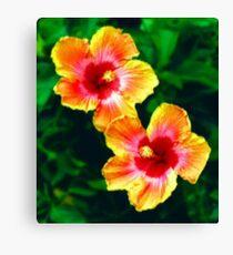 Twin hibiscus Canvas Print