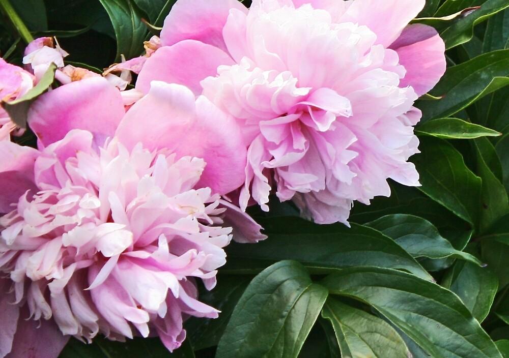 Epitomy of Pink by Nadya Johnson