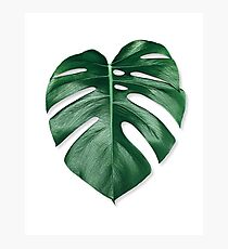 MONSTERA LEAF Photographic Print
