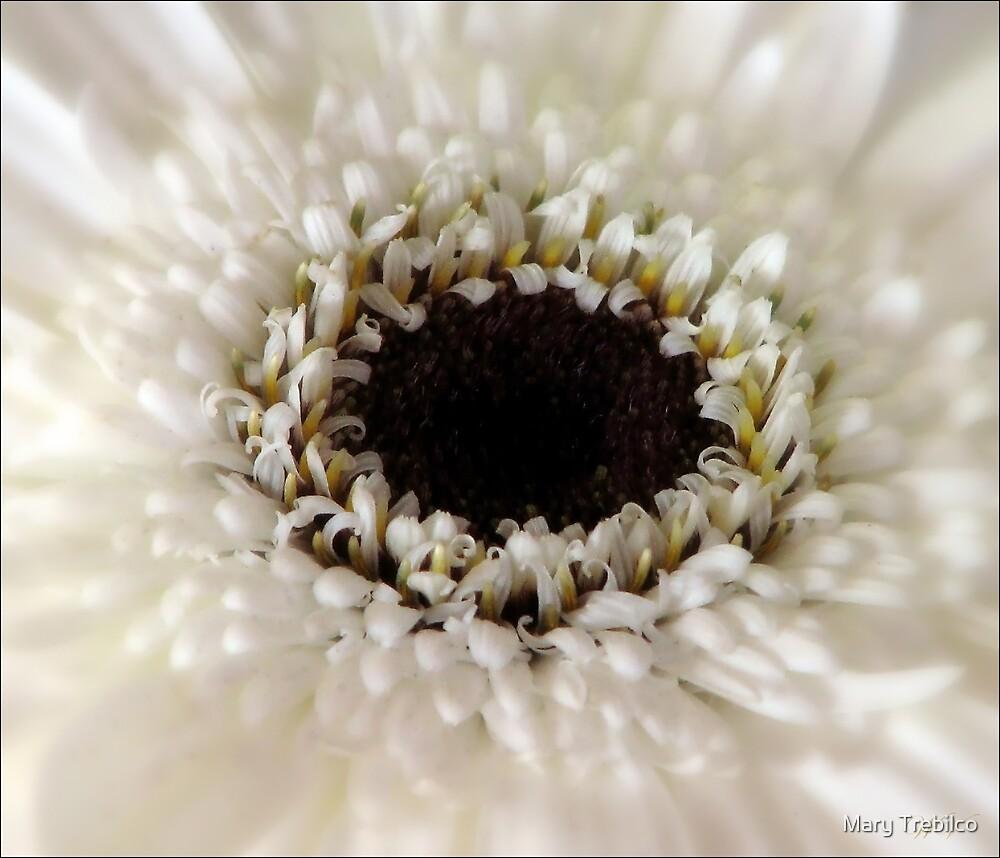 White light... by Mary Trebilco