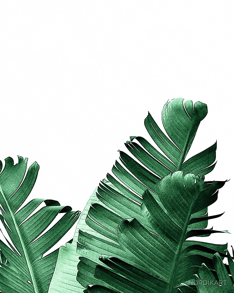 BANANA LEAF by NORDIKART