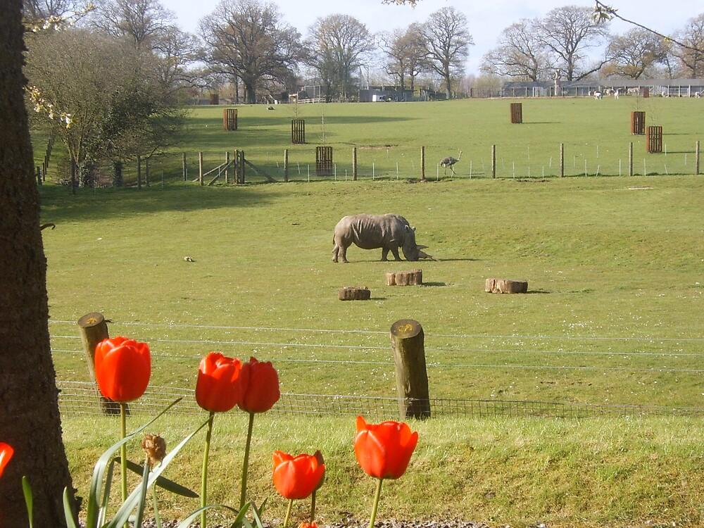 Rhino by Hides