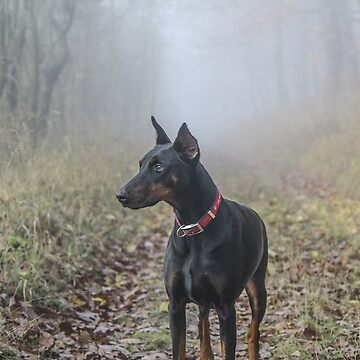 Doberman Pinscher by EdmondHoggeJr