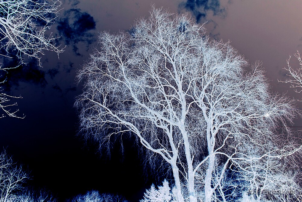 The Liver Tree by Jódís Eiríksdóttir