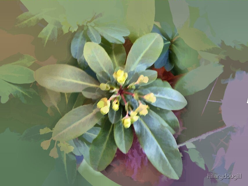 Abstract of Euphorbia by hilarydougill