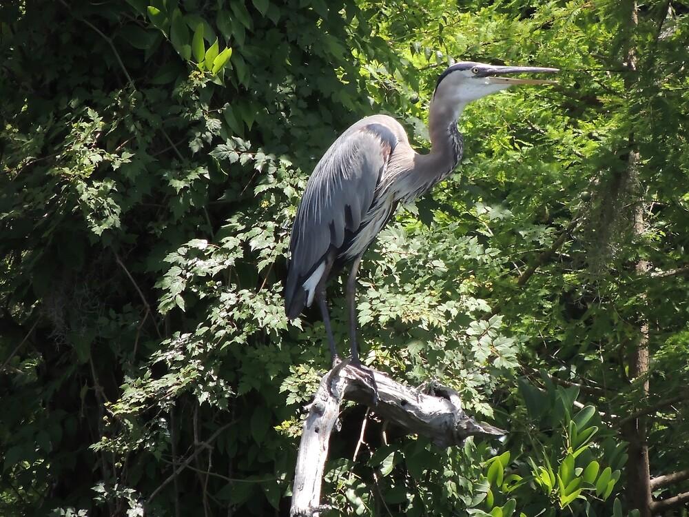 Watchful Blue Heron by LegacyArt