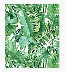 Green tropical leaves II Photographic Print