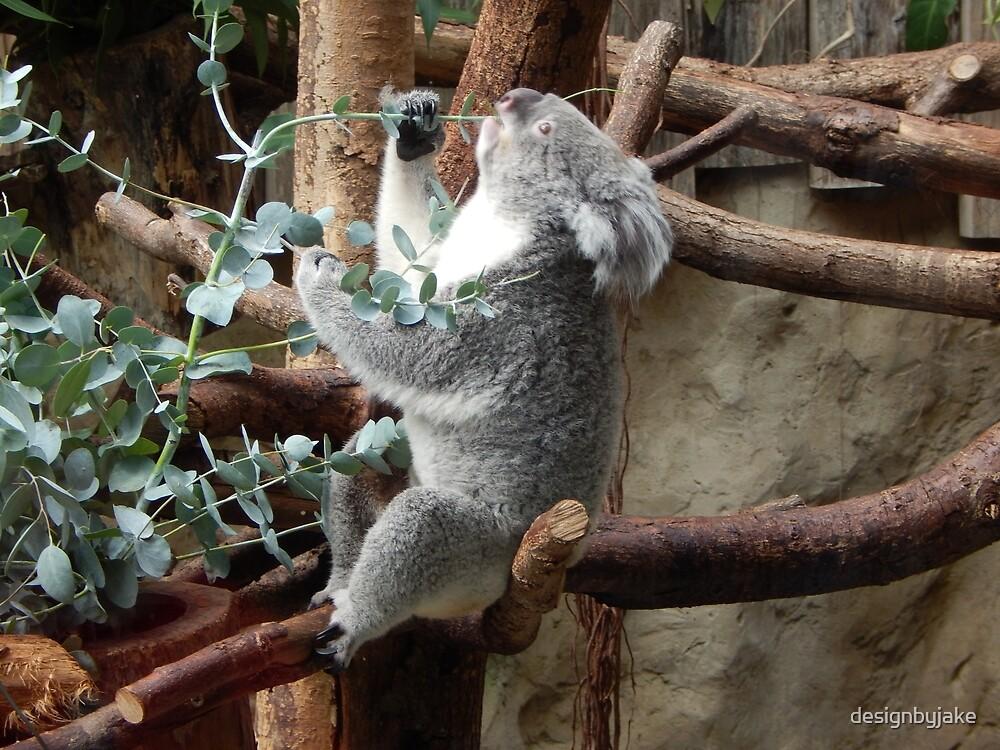 Eetende Koala by designbyjake