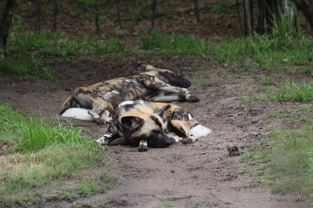 Wild Dogs in Africa by phanisinlove