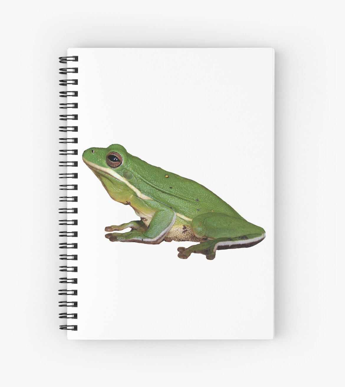 Little Green Frog by Bonnie T.  Barry