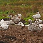 A Gaggle of Geese by Kat Simmons