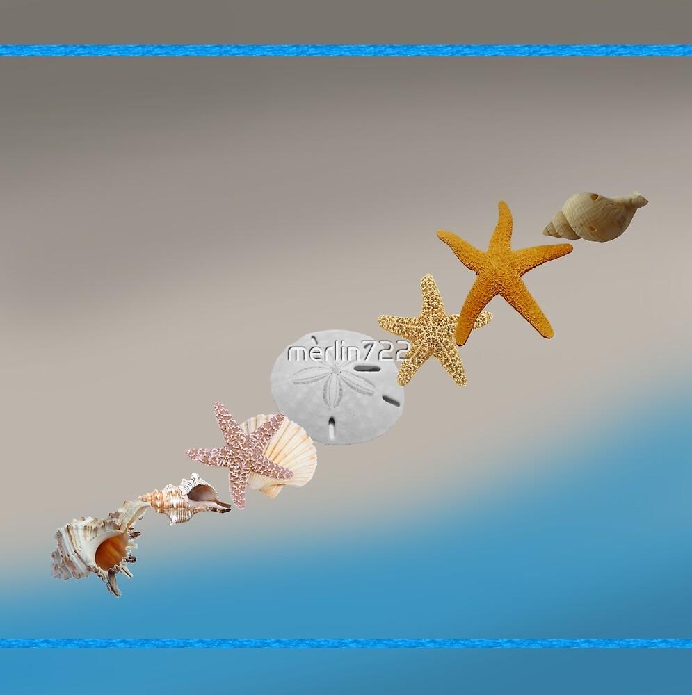 Shells by merlin722