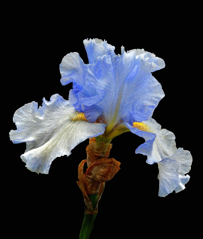Blue Tip by Floyd Hopper