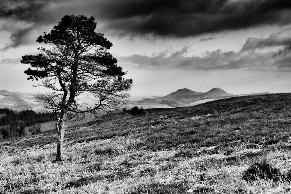 Lone Tree and Eildons, Scottish Borders by Iain MacLean