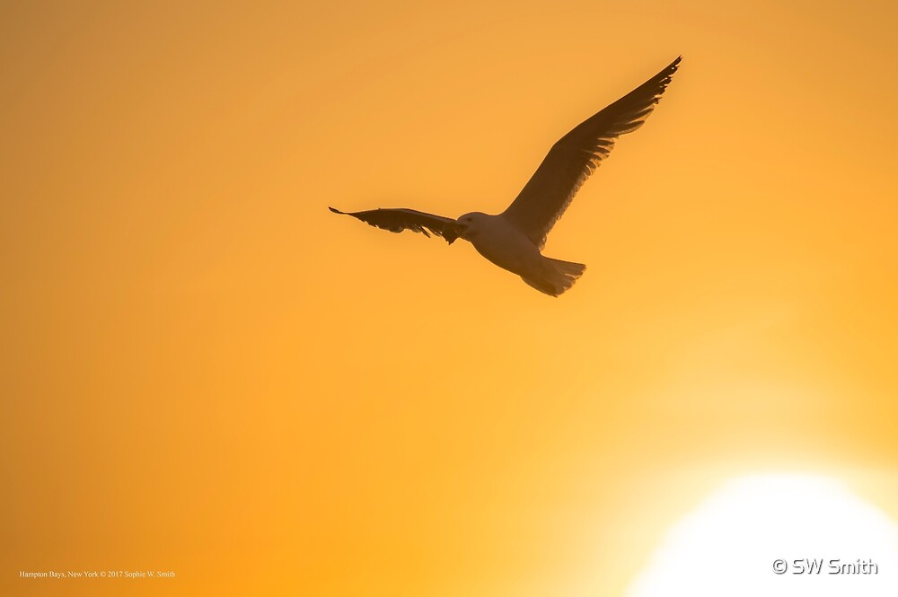 Seagull Flying Away From The Sun   Hampton Bays, New York by © Sophie W. Smith