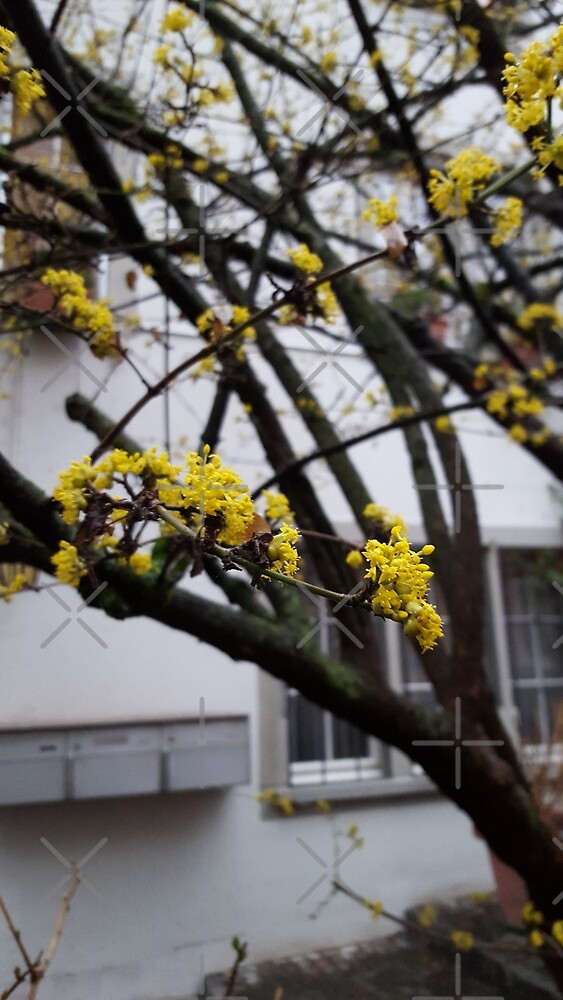 Yellow Flowers in Spring by MGDragon